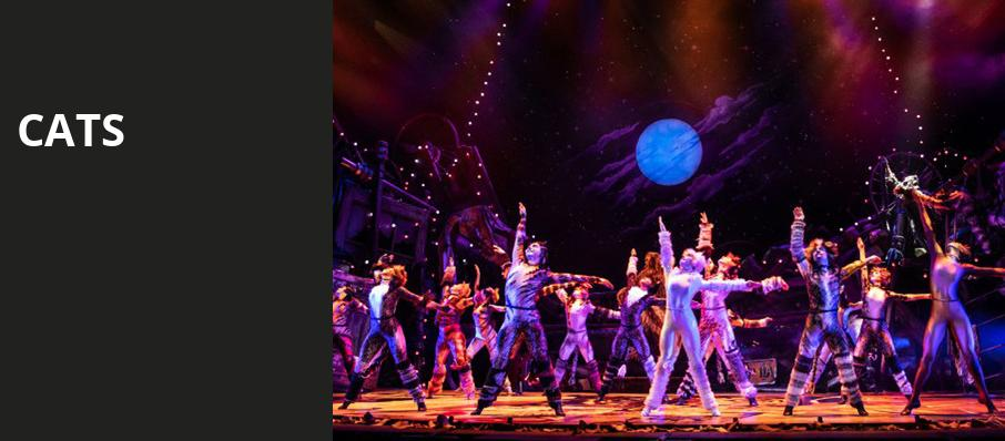 Cats, Princess of Wales Theatre, Toronto